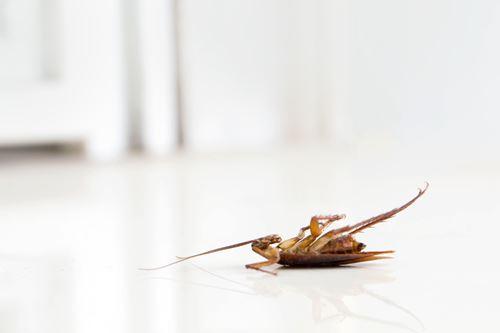 エアコンのゴキブリを追い出す方法