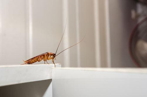 ゴキブリの侵入経路