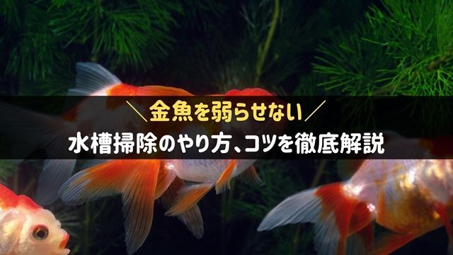 金魚の水槽掃除