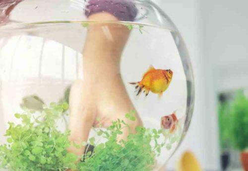 金魚の水槽掃除の方法