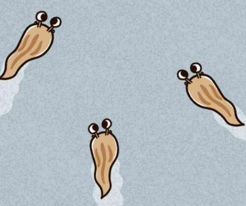 ナメクジが増殖する仕組み