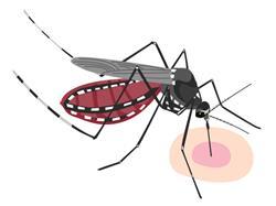蚊が血を吸う理由